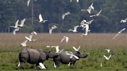 NGT Asks Assam Government To Clarify Presence Of Swanky Hotels In Kaziranga