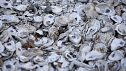 Sur la route des huîtres en Virginie