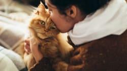 猫と暮らせる住まいを考える-(その2)障害は大家さんの誤解