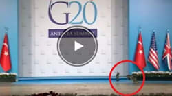 Tre gatti rubano la scena a Obama e Putin: