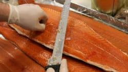 Le saumon, premier animal OGM autorisé aux