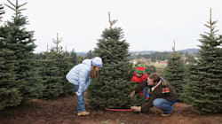 Save The Environment, Chop Down A Real Christmas