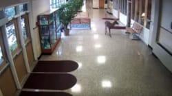 シカ、中学校の廊下に忍び込んだけど...