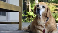 Why You Should Consider Adding An Older Pet To Your