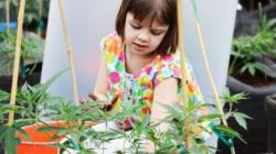 Health Insurance Snubs Medical Marijuana For The Wrong