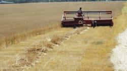 Climate Plan Might Hurt Rural Albertans, Farmers, Warn