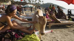 Goa Off Russia's List Of 'Safe' Travel
