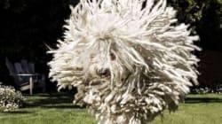 Le chien de Zuckerberg ressemble à une serpillière