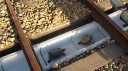 Comment des cheminots japonais ont sauvé des dizaines de