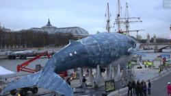 VIDÉO - La plus grande baleine du monde fait escale près du Grand