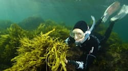 Bringing Back Sydney's Underwater Forests: Is This The Solution To Climate