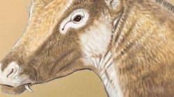 Cette girafe préhistorique tient son nom d'une reine de