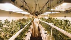J'ai visité le Costco du cannabis