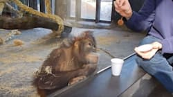 10 vidéos d'animaux qui ont fait le buzz en
