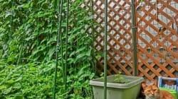 最近はやりの家庭菜園 その魅力に迫る