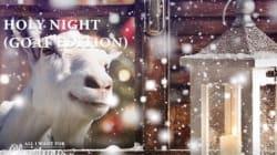 Les chansons de Noël interprétées... par des chèvres (pour la bonne