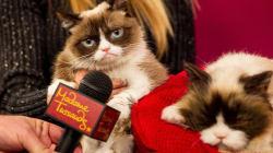 Grumpy Cat rencontre son sosie animé, mais ne sourit pas pour