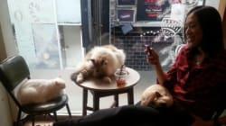 We Ain't Kitten: Vancouver's Cat Café Opens For