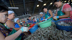 Thailand Says It's Not Ignoring Slavery In Shrimp