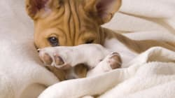 Dormire insieme ai nostri animali si può? Questo studio vi