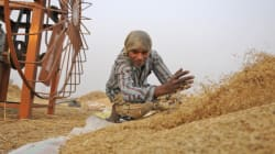Modi To Focus On India's 1st Major Crop Insurance Scheme In 2016