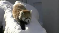 Bichinos a tope con la nieve