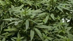 Government Targets Marijuana Use With Giant 'Stoner