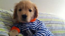 22 Animals Wearing Pajamas - Because This Is What Dreams Are Made