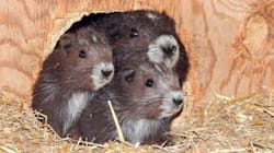 Marmot Pups Get 'Star Wars'-Inspired Names From Calgary