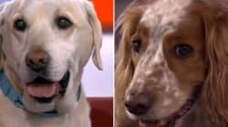 La BBC convie des chiens sur son plateau, les réseaux sociaux