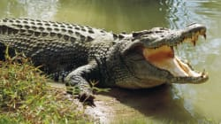 Crocs 'Out And About' In NT Floods, Spotted Swimming In Footy