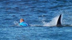 Nombre record d'attaques de requins en