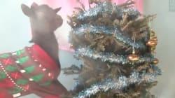 Que faire de son sapin de Noël? Le donner à des