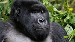 8 Animals That May Become Extinct In