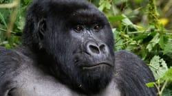 8 animaux qui ne survivront peut-être pas à 2016