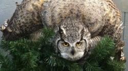 Alberta Wildlife Organization Asks For Christmas Tree