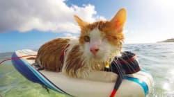 Ce chat borgne surfe et se la coule douce à