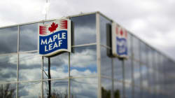 Maple Leaf Foods Offers To Hire Refugees In Alberta,