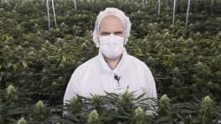 Medical Marijuana Doesn't Have To Be Kosher: Certification