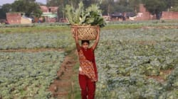 India To Launch Its First Major Crop Insurance Scheme In April: Agriculture