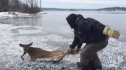 Ontario Men Risk Own Safety To Rescue Deer Trapped In