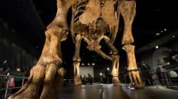 Une nouvelle espèce de dinosaure géant exposée à New York