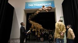 Ce nouveau dinosaure est tellement grand qu'il ne rentre pas dans le