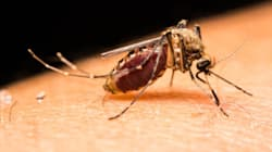 Pregnant Women Shouldn't Travel To Countries With Zika