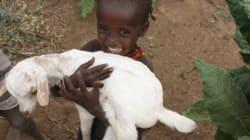 「われわれは政府や農場にだまされた」 土地収奪に苦しむエチオピア牧畜民のいま