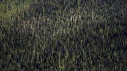 Industrie forestière : Une première entente de principe est