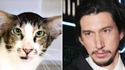 'Uncanny' Adam Driver Lookalike Cat Finds New Adoptive