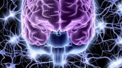 日本の研究グループ、世界で初めてヒトES細胞からホルモン分泌器官「下垂体」組織の作成に成功