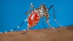 Ce que vous devez savoir sur le virus Zika
