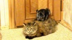 Floof le chat aimerait qu'on le laisse tranquille,
